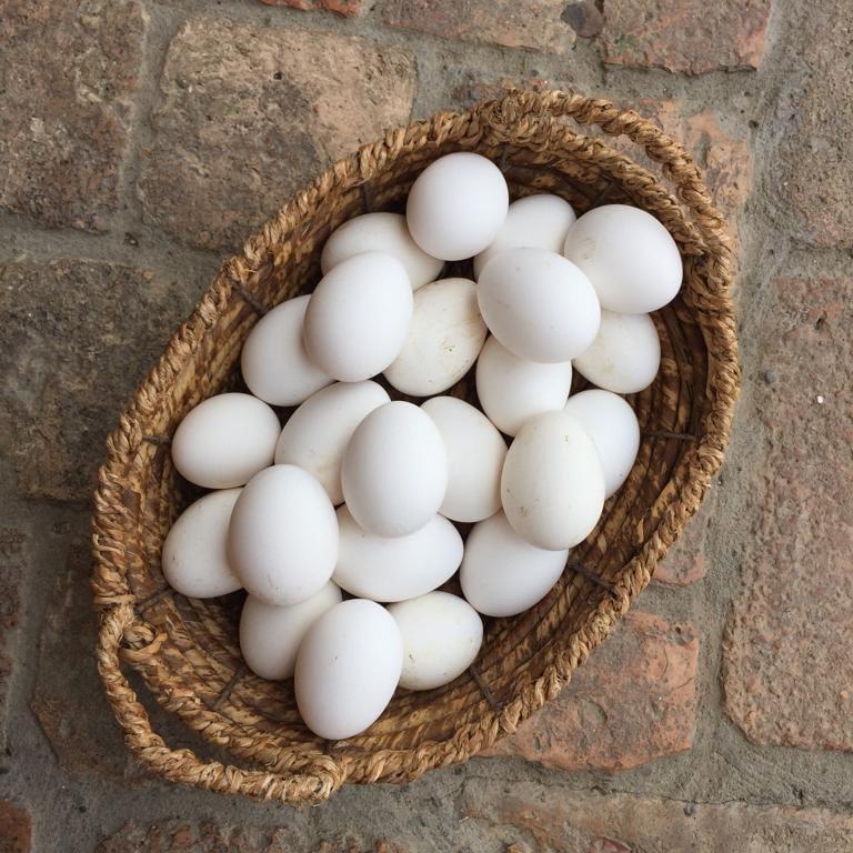uova del ronco